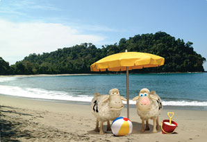 Two counting sheep on a beach