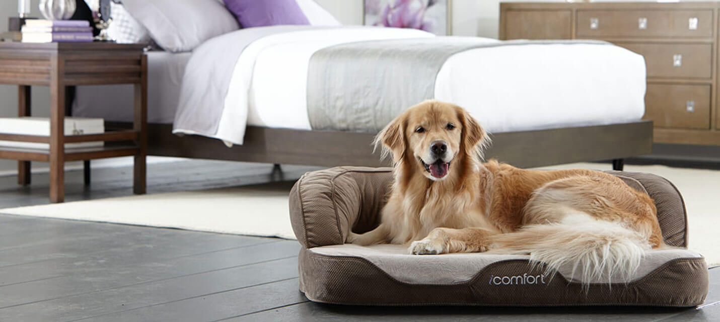 bed suppliers dog and l touch beds serta